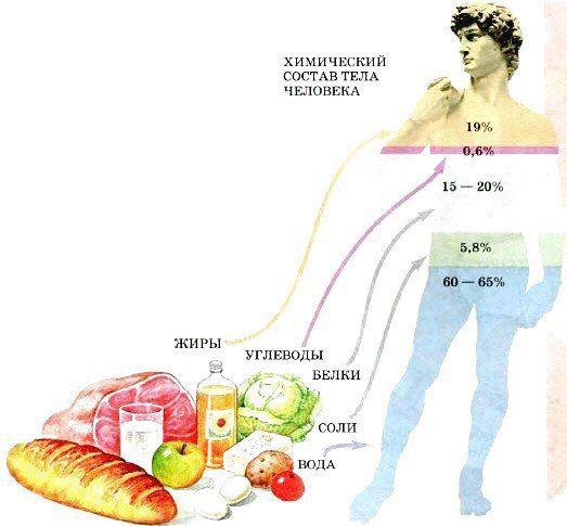 5cc30eceb2ea ... по питанию для широкого круга населения, которые могут нанести  непоправимый вред здоровью. Здесь мы расскажем об основных принципах  правильного питания, ...